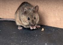 A brief guide on Mouse Nest